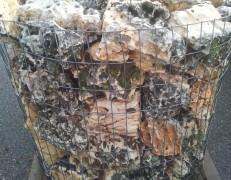 Roccia murgese canaletto